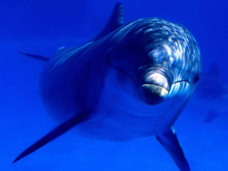 Delfin_Azul-8257801280