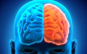 LAS UNIDADES FUNCIONALES DEL CEREBRO – Autoevaluacion – Descubre tu preferenciahemisferica