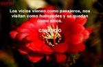 f-flor de rojo pasion