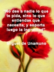 poppies red- poemas frases y pensamientos (116)