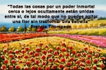poppies red- poemas frases y pensamientos (119)