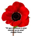 poppies red- poemas frases y pensamientos (128)