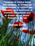 poppies red- poemas frases y pensamientos (22)