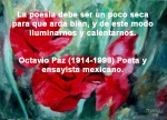poppies red- poemas frases y pensamientos (48)