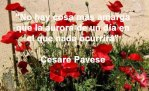 poppies red- poemas frases y pensamientos (52)
