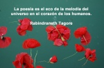 poppies red- poemas frases y pensamientos (58)