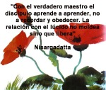 poppies red- poemas frases y pensamientos (62)