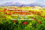 poppies red- poemas frases y pensamientos (8)