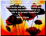 poppies red- poemas frases y pensamientos (80)