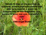 poppies red- poemas frases y pensamientos (81)