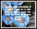 impresiones_del_cartel_de_las_amapolas_azules_FANNY JEM WONG