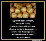 maslow-appreciate