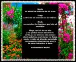 PENSAMIENTOS CITAS Y FRASES 0016) (5)