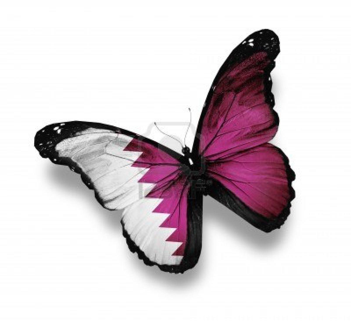 Fotos De Mariposa Con La Bandera