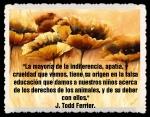 J Todd Ferrier.