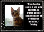 Tolstoy  -AN GAN EL GUARDIÁN DEL TEMPLO -JEM WONG (40)