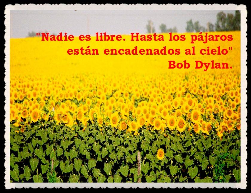 FRASES  BONITAS Y CITAS ILUSTRADAS (50)