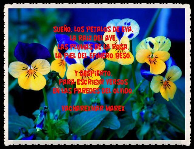 FRASES  BONITAS PENSAMIENTOS    (18)