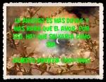 FANNY JEM WONG FRASES BONITAS CITAS Y PENSAMIENTOS      (156)