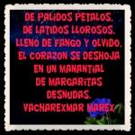 FANNY JEM WONG FRASES BONITAS CITAS Y PENSAMIENTOS     -- (26)