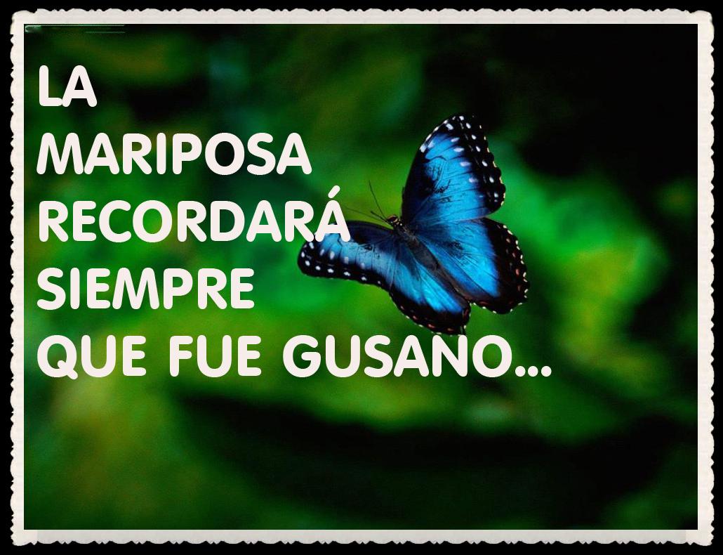 Frases Bonitas Con Mariposas Imagui
