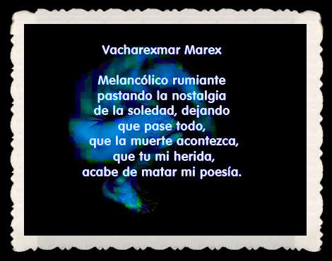 Vacharexmar Marex