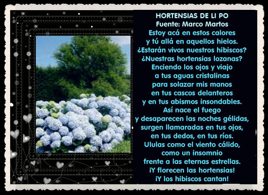 HORTENSIAS DE LI PO - Fuente  Marco Martos