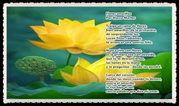 Flores amarillas por MARCO MARTOS POETA PERUANO