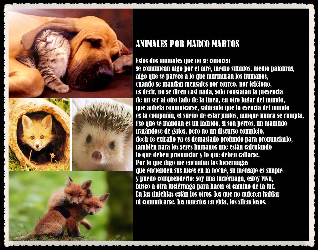 POEMA : ANIMALES POR MARCO MARTOS
