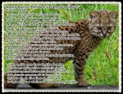1 Onza, yaguarundi, gato moro o leoncillo - MARCO MARTOS POEMA DE EL LIBRO DE ANIMALES ZUZÚ LA ONZA