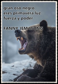 16 HAIKU-FANNY JEM WONG -gran oso negro 16