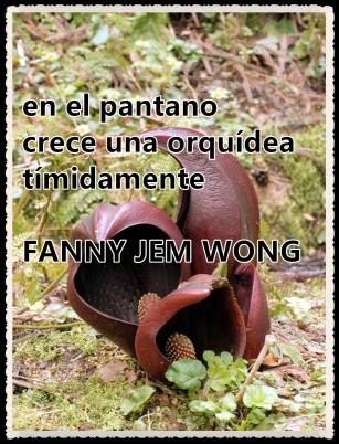 26 HAIKU-FANNY JEM WONG - ORQUÍDEA DEL PANTANO